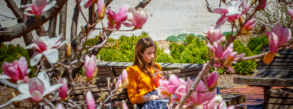 Young woman reading on a bench framed by the pink flowers of the magnolia trees near the Lied Center of Performing Arts